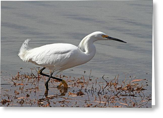 Lessor Egret Fishes And Stalks Greeting Card