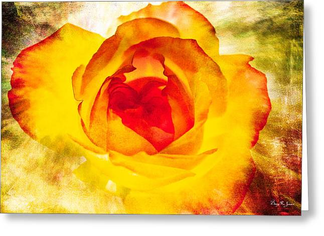 Floral - Rose - Let It Shine Greeting Card by Barry Jones