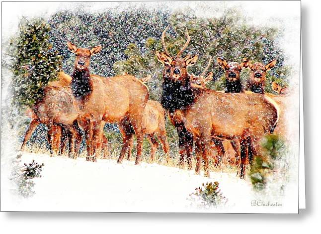 Let It Snow - Barbara Chichester Greeting Card