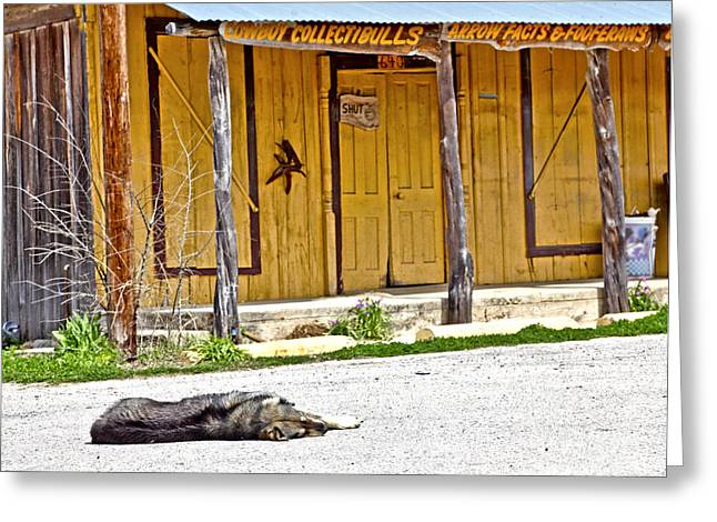 Let Sleeping Dogs Lie Greeting Card by Pattie Calfy