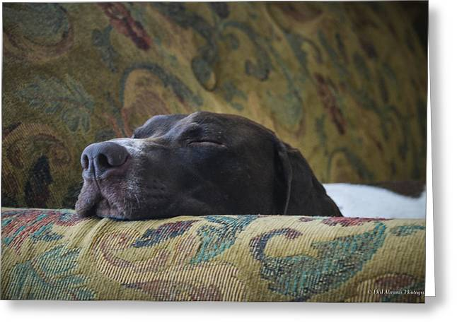 Greeting Card featuring the photograph Let Sleeping Dogs Lie. by Phil Abrams