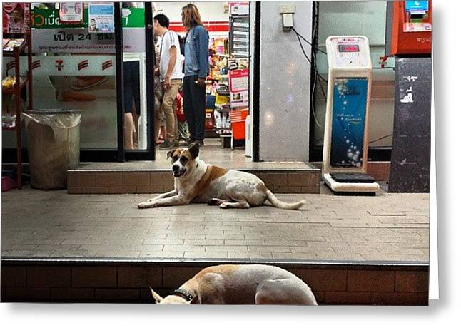Greeting Card featuring the photograph Let Sleeping Dogs Lie Where They May by Mr Photojimsf