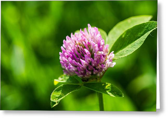 Let Us Live In Clover - Featured 3 Greeting Card by Alexander Senin