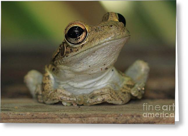 Let's Talk - Cuban Treefrog Greeting Card by Meg Rousher