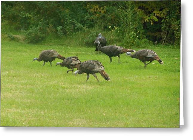 Let's Turkey Around Greeting Card