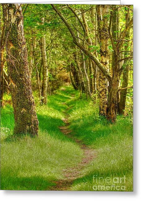Lets Walk Along The Sunlit Woodland Path Greeting Card by John Kelly