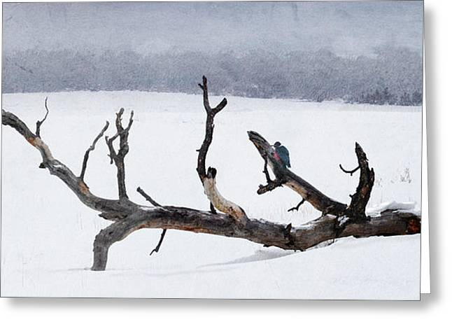 Letting Go  -  Lewis Woodpeckers Greeting Card by R christopher Vest