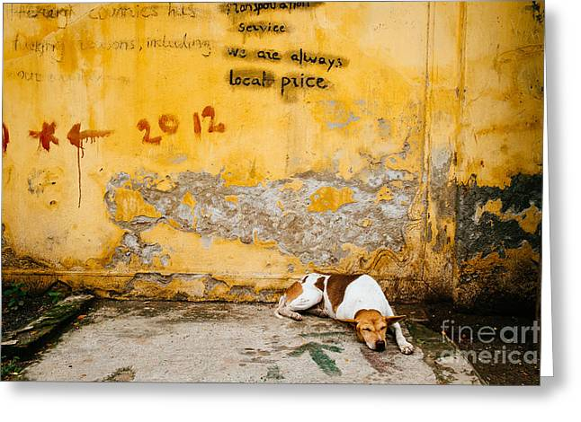 Letting Sleeping Dogs Lie Greeting Card by Dean Harte