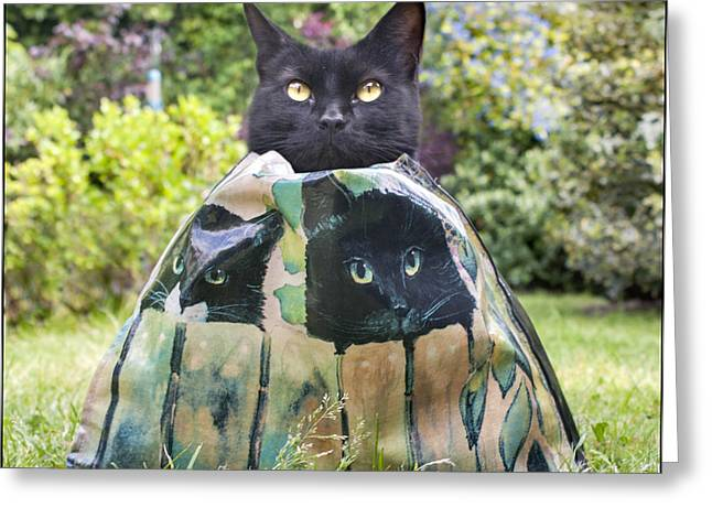 Letting The Cat Out Of The Bag Greeting Card by Adrian Campfield