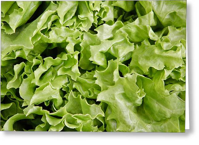 Lettuce Leaves Greeting Card by Tom Gowanlock