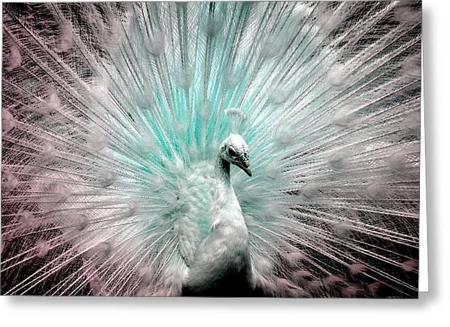 Leucistic White Peacock Greeting Card
