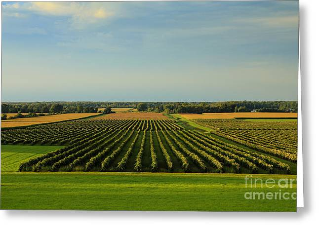 Lewiston Summer Vineyards Greeting Card
