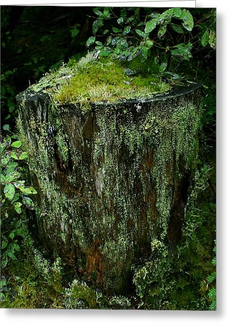 Lichen And Moss Covered Stump Greeting Card by Amanda Holmes Tzafrir