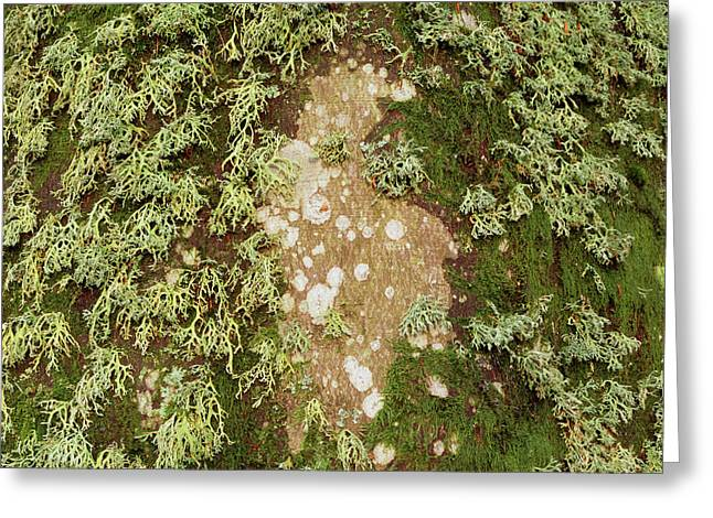 Lichen And Moss On Beech Tree Greeting Card by Simon Fraser/science Photo Library