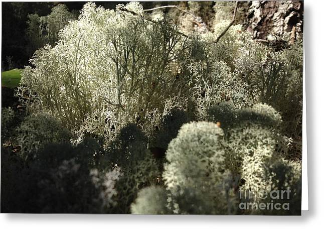Lichen Forest Greeting Card by Tayt Dame