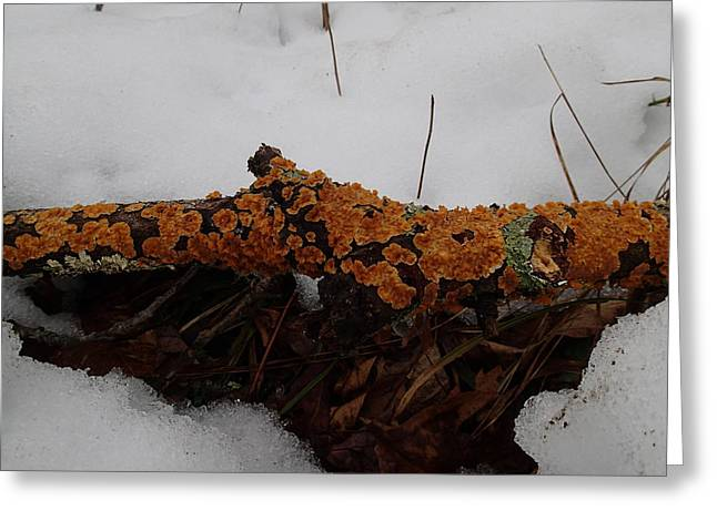 Lichen N'snow Greeting Card