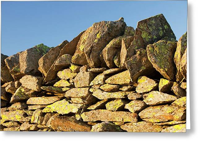 Lichen On A Dry Stone Wall Greeting Card by Ashley Cooper
