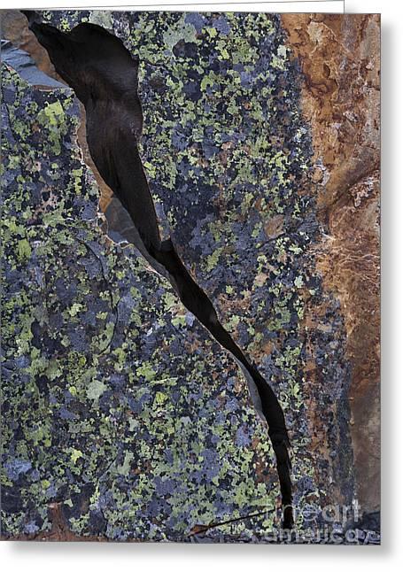 Lichen On Granite Greeting Card by Heiko Koehrer-Wagner