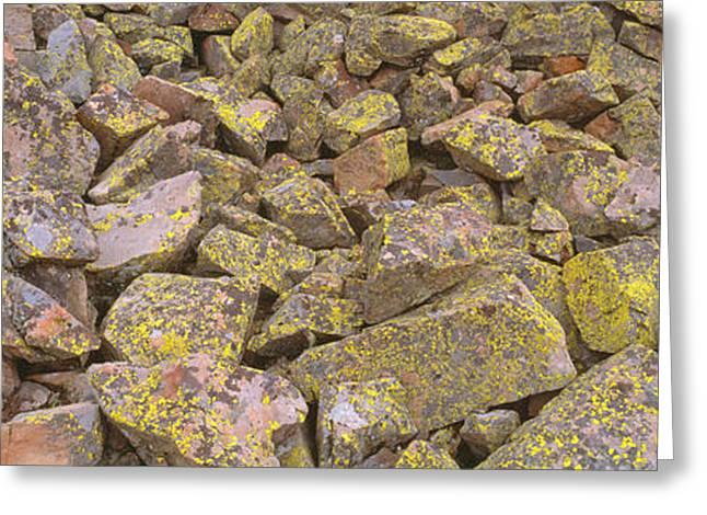 Lichens On Rocks At Yankee Boy Basin Greeting Card