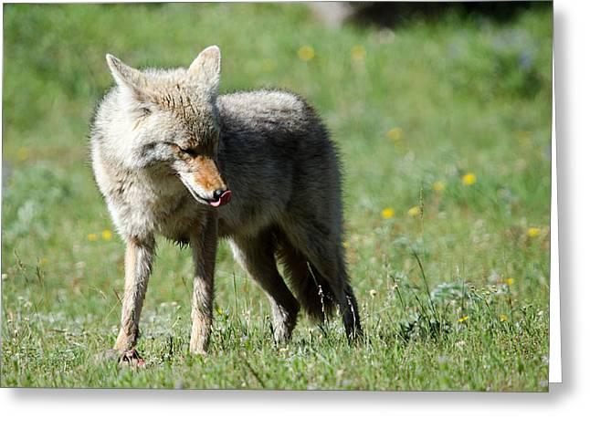 Lick His Chops Greeting Card by Gary Wightman