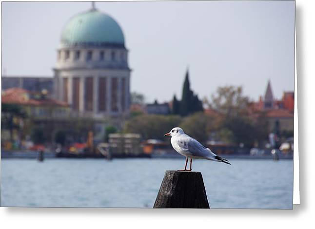 Lido Gull Greeting Card