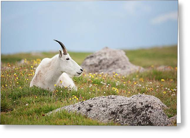 Lie Down In Green Pastures Greeting Card