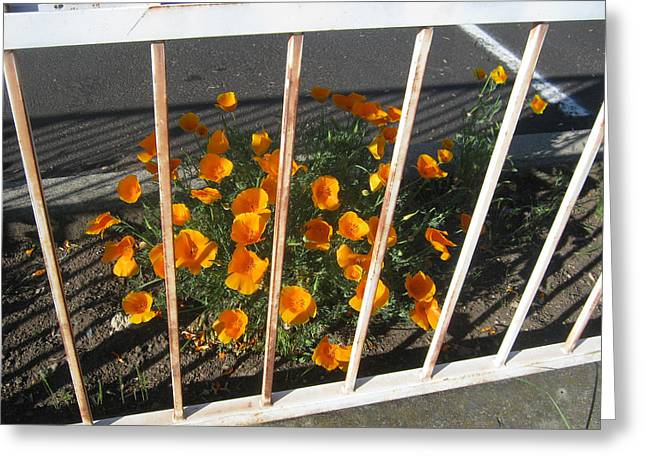 Greeting Card featuring the photograph Life Behind Bars by Marie Neder