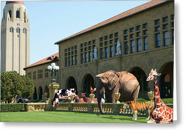 Life Down On The Farm Stanford University California Square V2 Dsc685 Greeting Card by Wingsdomain Art and Photography