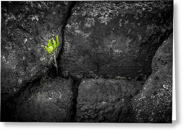 Life Finds A Way Greeting Card by Marvin Spates