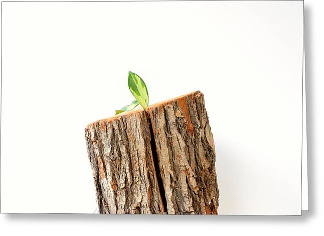Greeting Card featuring the photograph Life From Timber by Marwan Khoury