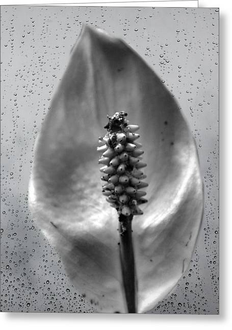 Life In Black And White Greeting Card by Dan Sproul