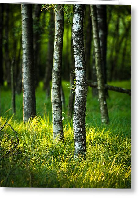 Life Is A Birch Greeting Card