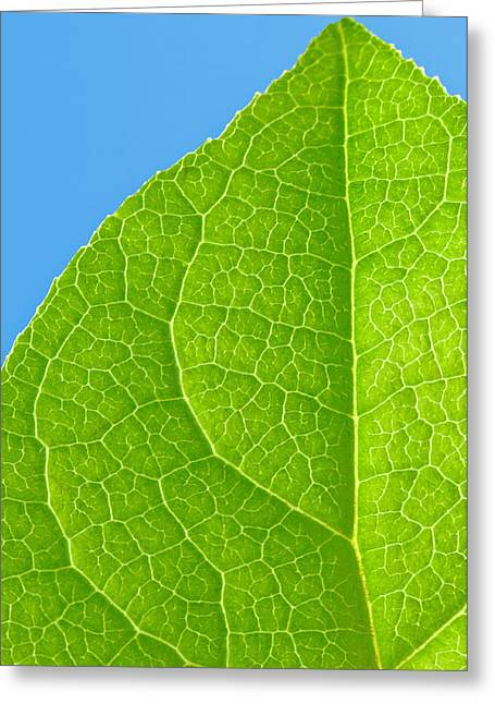 Life Of A Leaf Greeting Card by Joan Herwig