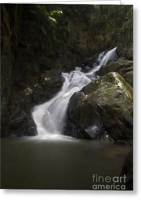 Greeting Card featuring the photograph life of Borneo. by Gary Bridger