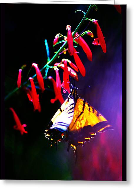 Life Of Butterfly Greeting Card by Susanne Still
