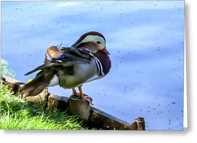 Life Of Duck II Greeting Card by Nathalie Hope