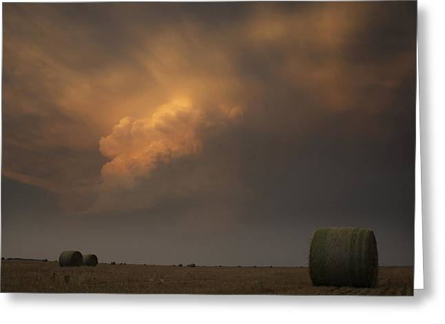 Life On The Plains Greeting Card