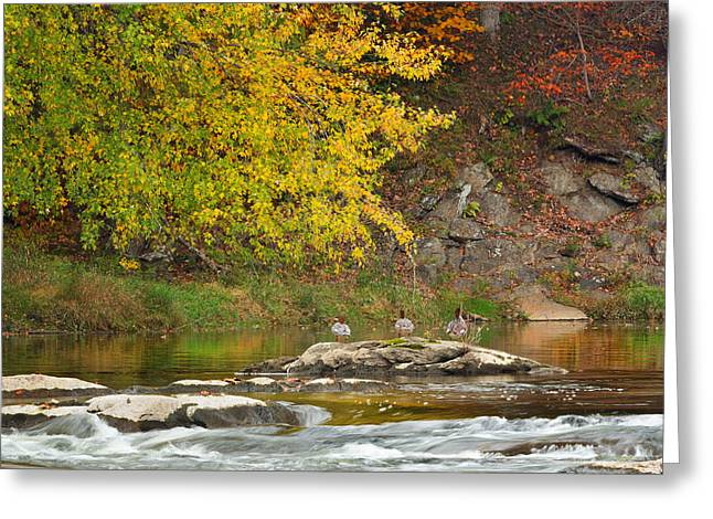 Life On The River Greeting Card by Bill Wakeley