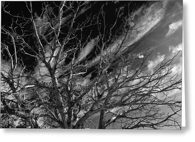Greeting Card featuring the photograph Lifes End by Eric Rundle