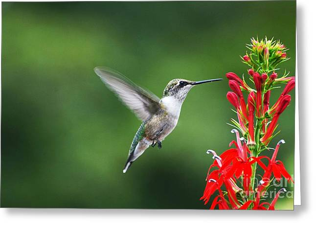 Lifes Little Pleasure Greeting Card by Judy Wolinsky