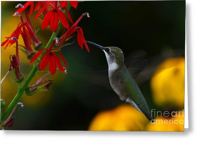 Lifes Little Pleasures 2 Greeting Card by Judy Wolinsky