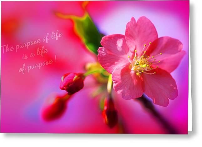 Life's Purpose Greeting Card by Li   van Saathoff