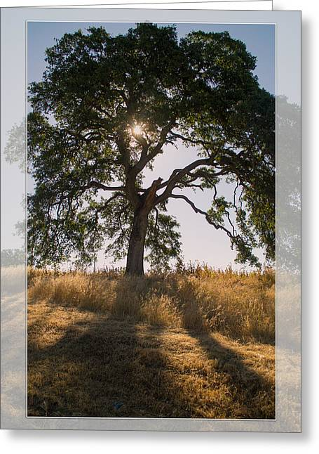Light And Life Greeting Card