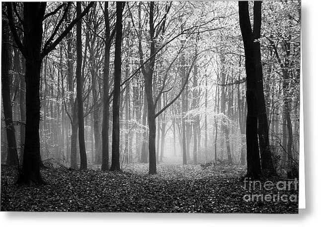 Light And Shadow Greeting Card by Anne Gilbert