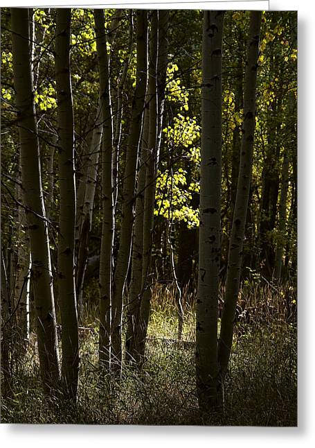 Light And  Shadows D0468 Greeting Card by Wes and Dotty Weber