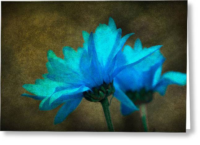 Light Blue Greeting Card by Linda Segerson
