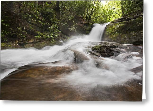 Light In The Forest Greeting Card by Debra and Dave Vanderlaan