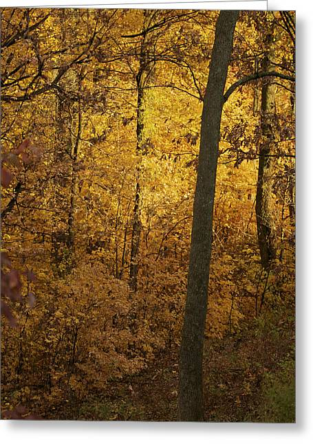 Light In The Forest Greeting Card by Jane Eleanor Nicholas