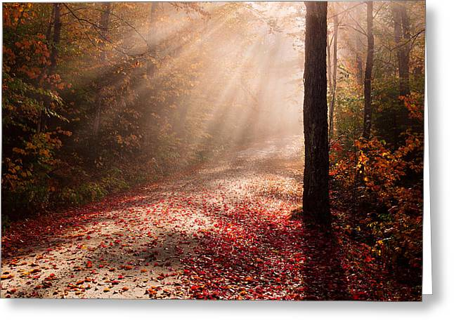 Light In The Forest Greeting Card by Michael Blanchette
