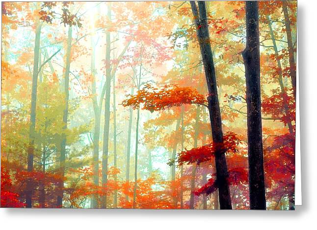 Light In The Forest Greeting Card by William Schmid